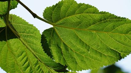 Nombres comunes de hojas imagui for Arboles jardin hoja perenne
