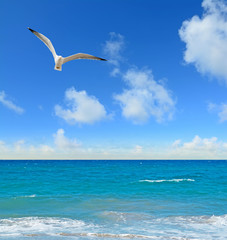seagull flying over a blue shore
