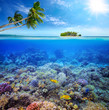 Coral reef with fish on background of small island. Maldives - 74370431