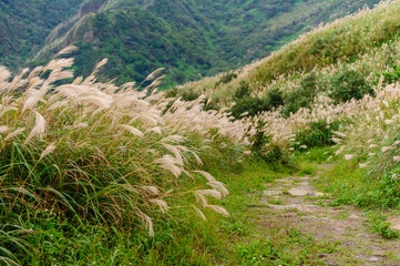 path on the peak of mountain with silvergrass