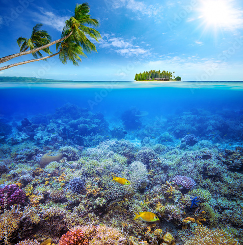 Foto op Plexiglas Koraalriffen Coral reef with fish on background of small island. Maldives
