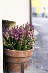 Flowers pot. Color image