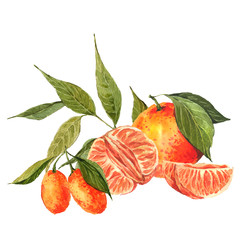 Watercolor background with oranges and tangerines