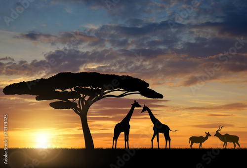 Fotobehang Antilope Giraffes with Kudu at sunset