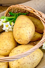 Potatoes yellow with flower in basket on sackcloth and board