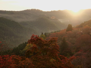 吉野山の朝日