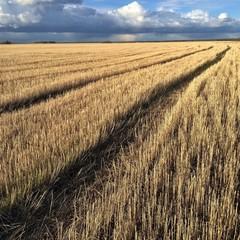 Осеннее поле после уборки урожая
