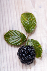 blackberry and leaf