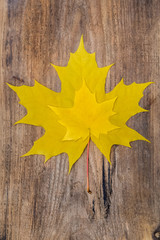 Two Yellow Maple Leaf Lying on a Wooden Board