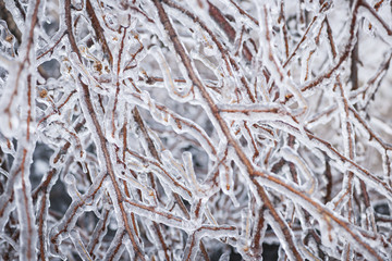 Winter branches in ice