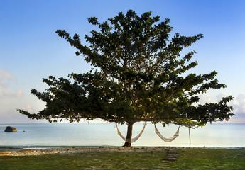 Lonely tree with hammocks