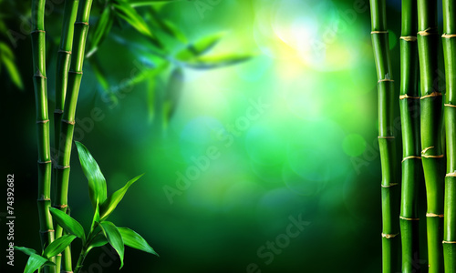 Foto op Canvas Bamboo border green bamboo in dark forest
