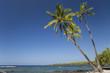 canvas print picture - Meer und Palmen
