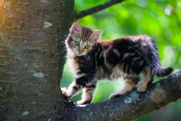 Cute kitten on a tree