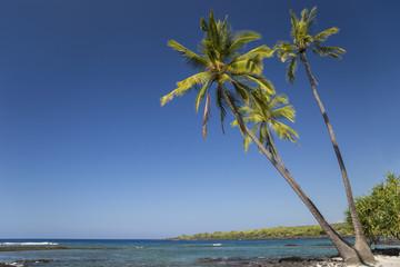 Meer und Palmen
