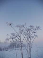 frozen winter plant