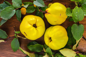 Three yellow ripe quince with leaves