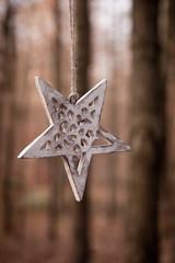 Stern in der Natur