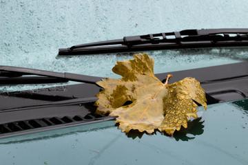 leaf on the hood