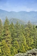 Sequoia National Monument, California