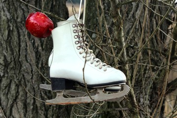 Pair of White Ice Skates hanging on the tree