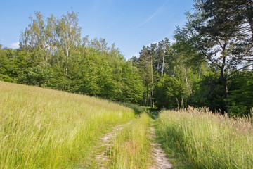 Slovakia - The summer meadow in the forest and the way.
