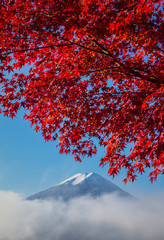 Mount Fuji with autumn colors