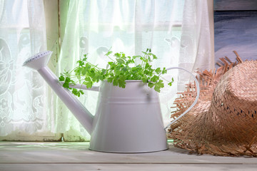 Watering can full of fresh herbs in the kitchen
