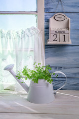 Watering standing with herbs in sunny kitchen