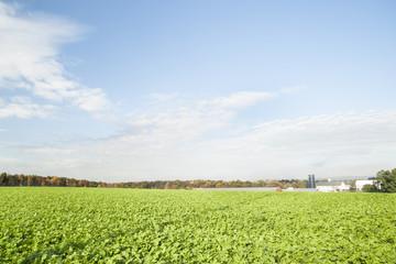 Green fields of crops in Pennsylvania.
