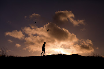 bird, walk sky human love silhouette sunset way