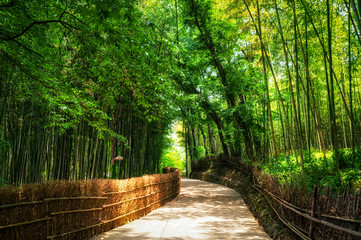A small road through the bamboo forest.