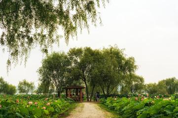 Goongnamji in Buyeo during lotus flower festival