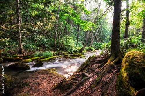 In de dag Bamboo Small cascading waterfall in a creek taken in Biei, Japan.