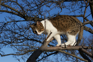 young cat on the tree