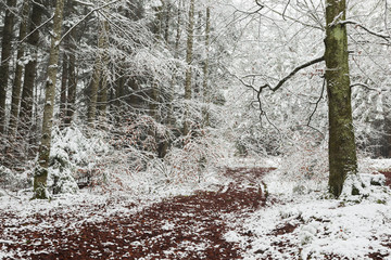 Red leaves in the snow in the forest