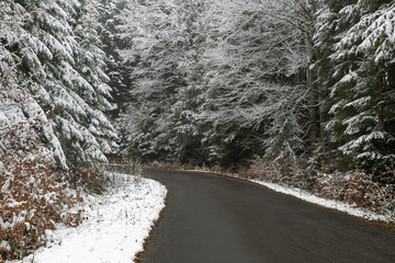 Paved road through a forest during winter