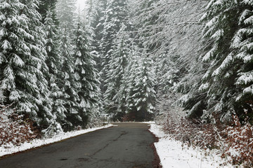 Road through a forest during winter