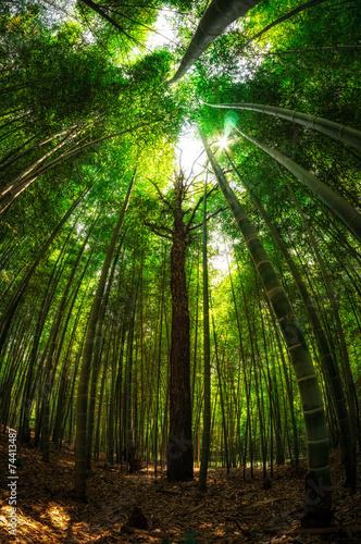 In de dag Bamboo Bamboo forest in Damyang, South Korea taken during summer.
