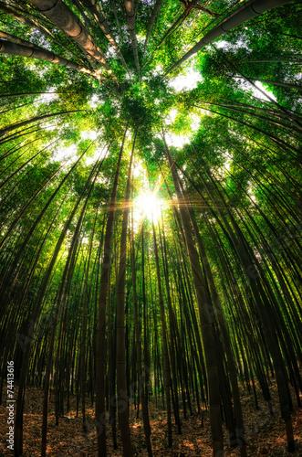 In de dag Bamboo Bamboo forest in Damyang, South Korea.