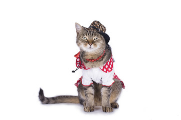 kitten in a red and white dress on a white background isolated