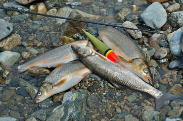 Catch of fish 15