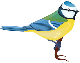 Side view of a Blue Tit - vector illustration