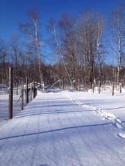footprints in a snowy parh