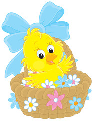 Easter Chick in a basket with flowers