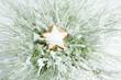 canvas print picture - Zimtstern auf befleckter Pflanze