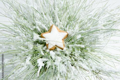 canvas print picture Zimtstern auf befleckter Pflanze