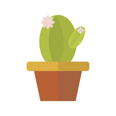 flat cactus in a pot, house plant