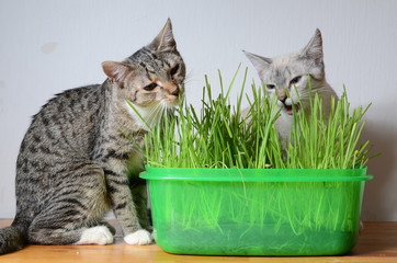 kittens and grass