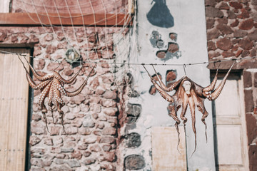 Drying octopuses in Ammoudi bay, Santorini, Greece.